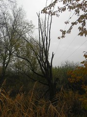 DSCN7418 (Gianluigi Roda / Photographer) Tags: autumn autumncolors tree deciduoustrees