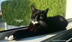 Mon, Dec 5th, 2016 Lost Female Cat - Honeypark, Dun Laoghaire, Dublin (Lost and Found Pets Ireland) Tags: lostcathoneyparkdublin lost cat honeypark dublin december 2016