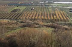 La Sarvaz (bulbocode909) Tags: valais suisse saillon lasarvaz vergers arbres automne brume jaune vert