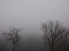 Grey gray gris (grongar) Tags: fog trees november vermont