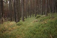 Aicha-Spinges-Schabs-Neustift-Brixen (inge.sader) Tags: sdtirol altoadige trentino eisacktal spinges natz schabs neustift brixen forrest landschaft landscape sonyalpha7ii sony mhlbach elvas