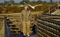 Enjoy nature... take a walk  (Explored) (Konabish ~ Greg Bishop) Tags: bolsachicaecologicalreserve wetlands nature wildlife birds greategret walking flying explored beautyunnoticed fivethousandviews 5000