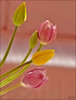 ♪♫♫♫♪ (mutter2009 *OFF*) Tags: flowers tulips ngc naturesfinest blueribbonwinner coth theworldwelivein nikond60 bej fantasticnature alittlebeauty coth5