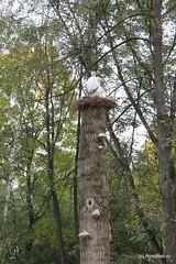 Инсталляция в парке Пушкина.