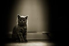 J-C-5 (Robert Sendziak) Tags: light pet cute animal cat canon fur eos furry low 100mm 5d f28 available mark3 markiii 2470