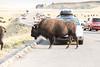 Yellowstone (60 of 71) (jrazzaq) Tags: waterfall august yellowstone grandtetons geyser bison hotsprings 2013