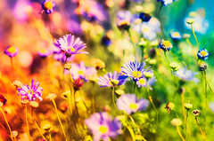 Flower power colour (Appe Plan) Tags: world life plant abstract flower macro cute nature colors up field closeup nikon colours close zoom sweden bokeh small 100mm tokina appe d700