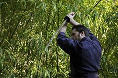(Hanna IV Photography) Tags: blue autumn light portrait people italy plant man motion green nature yellow japanese italian martialarts katana piedmont iaido coldweapon nikond90 perosaargentina