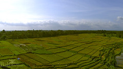 Ricefield View (balihotelguide) Tags: people bali religious ceremony culture balidive balidiving balihotels traveltobali baliriver eventsandfestivals balitraditional baliadventure baliaccommodation balimountain balientertainment baliactivities baliresorts balipackages baliinfo balielephants balientertaiment baliislands balitropical don'tmiss