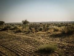 On the Way to Desert (Myself more than Synghan) Tags: boy india canon village desert indian goat powershot safari camel goats jaisalmer manju a630