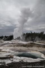 Lion Geyser Yellowstone (lyndakmorris) Tags: lion yellowstone geyser
