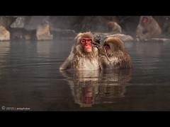 W h a t Y o u L o o k i n A t ? (AnthonyGinmanPhotography) Tags: japan monkey nagano naganoprefecture snowmonkeys olympuse30 snowmonkeypark
