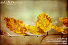 Textured Autumn Leaves Photographic Art (Natalie Kinnear) Tags: autumn trees orange brown tree texture nature leaves yellow forest woodland print leaf woodlands rust fineart digitalart tan wallart autumnleaves canvas textures prints interiordesign forests homedecor fineartphotography ashdownforest ashdown artprint canvases artprints fineartprint fineartprints coloursandshapes roughtextures fineartphotographicprint nataliekinnear fineartphotographicprints nataliekinnearphotography