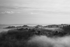 pittore, pensaci tu (Eddie_Felson) Tags: trees fog alberi rural landscape campagna tuscany toscana nebbia paesaggio nikkor85mmf14afd vision:outdoor=0805 vision:clouds=0915 vision:sky=0845 vision:ocean=0792
