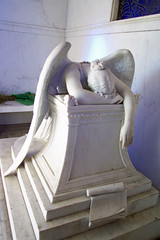 Chapman-Hyams angel front