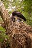 Abdims Stork Nest