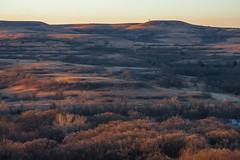 Find the Bison (Vincent Parsons) Tags: winter grass dawn buffalo ks hills kansas prairie plains bison flint graze flinthills konzaprairie konza bluestem