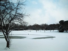 The small pond in winter (bjebie) Tags: trees winter ohio snow nature beauty pond day snowscape pwwinter vision:outdoor=0987 vision:sky=0804