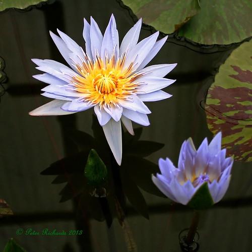 Chiang Mai Flora. 2013.