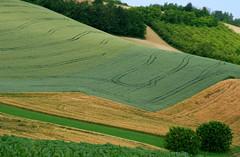 MM undulating fields (momentcollection) Tags: italy landscapes piemonte monferrato monferratopaessaggio