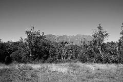 Center of the universe... (ti_rouge) Tags: world heritage blancoynegro nature reunion noiretblanc ile nb des tropical piton tropic worldheritage centeroftheuniverse neiges iledelareunion reunionisland pitondesneiges pinton tropique natureblackandwhite ilereunion isladereunion worldheritagelandscape