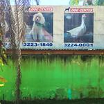 Dog center? (Rio Branco, Brazil)