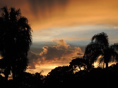 Sunset Saturday Night (Jim Mullhaupt) Tags: sunset wallpaper sky orange sun storm color tree weather silhouette yellow clouds landscape nikon flickr florida palm coolpix bradenton p510 mullhaupt jimmullhaupt