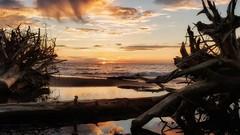 Fall rise (ossington) Tags: sunrise reflection driftwood canada toronto scarborough