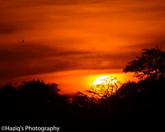 wild set.. (haziq ali) Tags: sunset winter nature dusk nikon nikonpakistan naturescape naturephotography digitalart artist islamabad pakistan