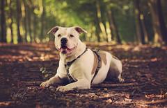 Lola, Shelter dog (xipevideo) Tags: shelter denhaag nikon 70200