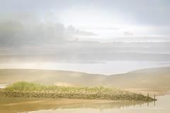 Transition (Bertrand Thifaine) Tags: loire automne d5100 teintes brume pi sable fleuve arbres touecabane champtoceaux oudon oiseaux