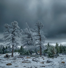 The Dead Zone (RRobertsphoto) Tags: wyoming hoarfrost dead trees