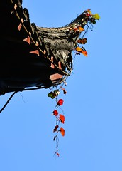 Shanghai - Eaves with Leaves (cnmark) Tags: china shanghai huangpu district yu yuan garden architecture classic eaves leaves building buildings historical historic gebude bltter dach dachvorsprung     allrightsreserved