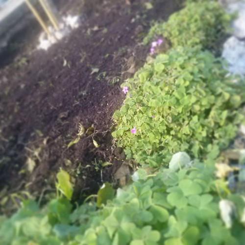 #wip #giardino #garden work in progress #Avezzano #Marsica