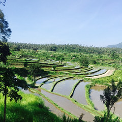 . First sight of the rice terraces field on our way to Ubud. (Total TaiTai) Tags: singapore life expat bali rice terraces ubud cjsettlinginsingapore cjbali2016