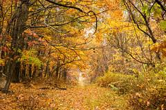 untitled (Homemade) Tags: marxpreserve goldensbridge lewisboro sonydscrx100 westchestercounty fall fallcolors autumn autumncolours newyork ny