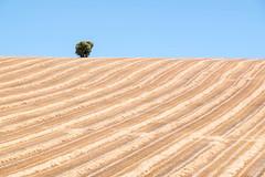 line wave (Rainer ) Tags: welle wave linien lines lneas lignes felder getreide fields grain iberischemeseta castilla kastilienlen espaa spanien spain espagne color sommer2016 rainer