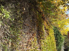 Harsimus Branch Embankment, Autumn Colors, Jersey City, New Jersey (lensepix) Tags: harsimusbranchembankment autumncolors jerseycity newjersey harsimusstemembankment autumn fallcolors