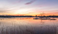 Frozen Hatertse vennen (NL) (Henk Verheyen) Tags: hatertsevennen bevroren blauw frozen geel ice ijs landscape landschap oranje rood sunrise vennen water zonsopkomst overasselt gelderland nederland nl outdoor