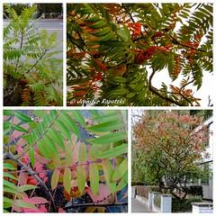 Collage_Dschungel in der Stadt (Bernsteindrache7) Tags: autumn panasonic lumix landscape outdoor leaf color flora fauna green red