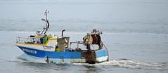 """Le Miquelon"" (YellowSingle ) Tags: miquelon fishing boat atlantic ocean socoa nikon d3 pays basque bayonne"