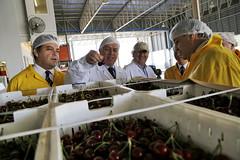 Inicio del envío de cerezas chilenas a China