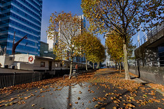 Autumn on the Wharf 13th Nov (23 of 37) (johnlinford) Tags: autumn canarywharf canon canonefs1022 canoneos7d docklands e14 landscape london towerhamlets urban urbanautumn