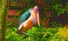 Big bird (Rajavelu1) Tags: bird birdphotography bigbird colours art aroundtheworld artland creative canon6d jurongbirdspark singapore streetphotography nature beautyofnature