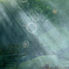 Vol de méduses (andrefromont/fernandomort) Tags: andréfromont andrefromontfernandomort fernandomort méduse medisa
