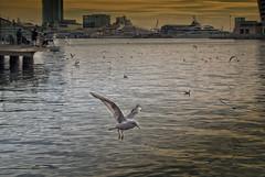 Moll d'Espanya (JC Arranz) Tags: mar españa barcelona ciudad atardecer gaviotas edificios muelle gentes crepusculo puerto olimpico moll de la fusta nikon1 j2