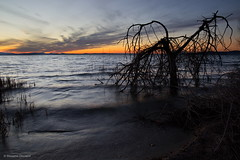 A tree (Massimo_Discepoli) Tags: tree water lake sunset trasimeno clouds waves umbria italy