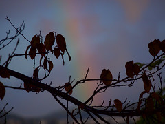 Rainbow 20161123 (caligula1995) Tags: 2014 plumtree rain rainbow