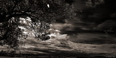 "DSC_6963_v1 (Pascal Rey Photographies) Tags: paysages landscapes landschaft blancoynegro blackwhite noirblanc sépia valléedebièvrevalloire digikam digikamusers linux opensource freesoftware ubuntu drôme omot autofocus ""nikonflickraward"""