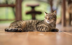 kittens (30) (Vlado Ferenčić) Tags: cats catsdogs kitty kittens animals animalplanet zagorje hrvatska croatia nikond600 nikkor8518